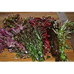 50 Bunched & Weighted Live Aquarium Plants - Aquatic Plants for your fish tank 6
