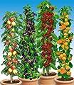 BALDUR-Garten Säulen-Obst-Raritäten-Kollektion Apfel, Brombeere, Kirsche + Aprikose, 4 Pflanzen Obstbäume von Baldur-Garten bei Du und dein Garten