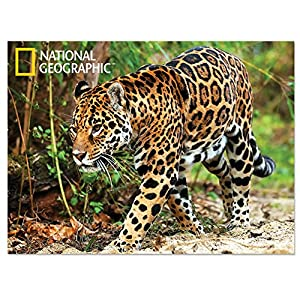 National Geographic NG28500 Jaguar Super 3D - Póster Infantil de Pared