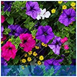 IDEA HIGH Seeds-ZLKING Exotische Seltene Klettern Morning Glory Blume Bonsai Outdoor Anlage für Hausgarten 100 Stücke