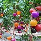 Kisshes Giardino - 100 pezzi di semi di pomodoro arcobaleno semi di pomodoro semi di ortaggi frutta redditizia perenne Hardy per giardino balcone/patio