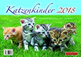 Katzenkinder 2018, Schmußekätzchen zum Verlieben!
