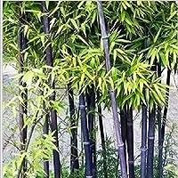 25 Semillas de Bambú Multicolor