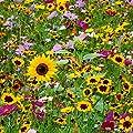 Blumen-Mischung Original Mössinger Sommer® für 6 qm von Gärtner Pötschke - Du und dein Garten
