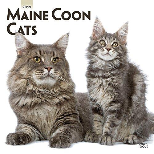 Maine Coon Cats - Maine Coon Katzen 2019 - 18-Monatskalender (Wall-Kalender)