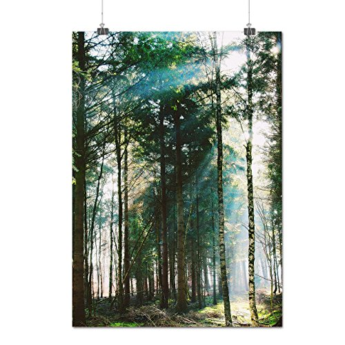 green-summer-forest-wild-nature-matte-glossy-poster-a3-42cm-x-30cm-wellcoda