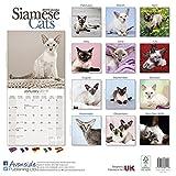 Kalender 2019 Siamkatzen - Siamesen - Siamese Cats mit Weihnachtskarte