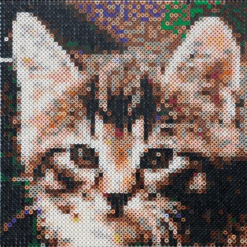 EFCO Foto Perlen Bead by Zahlen Katze mit Zubehör, Kunststoff, mehrfarbig, 5x 5mm, 3600-piece