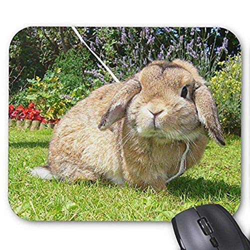 Gaming-Mausunterlage mousemat Reizendes Kaninchen Mousepad Serie Brown lappte Ohr-Kaninchen mit Lavendel-Mausunterlage Häschen-Kaninchen-Mausunterlage-Rechteck Mousepads - Lavendel Kaninchen