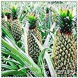 1bag = 100pcs Ananas Semi di frutta semi verdi Rare Esotico Bonsai Pianta in vaso decorazione del regalo Casa e giardino