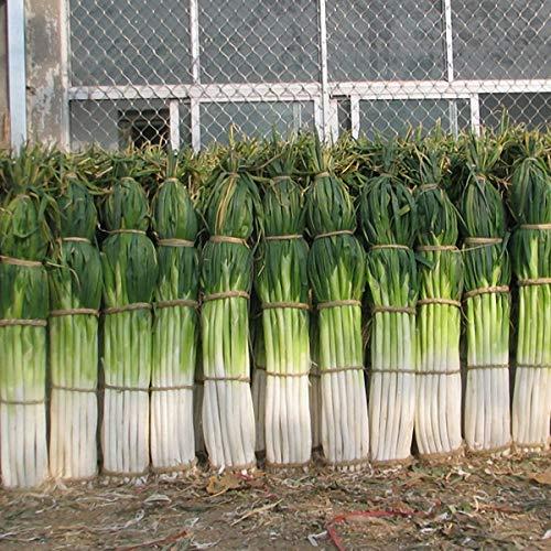 KINGDUO Egrow 100Pcs/Bag Green Scalogno Semi Stagione Semi Vegetali Speciali Ad Alto Rendimento Semi di Verdura