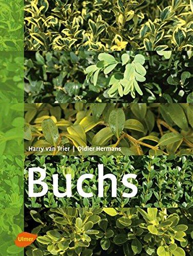 Buchs