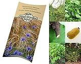 Saatgut Set: 'Paleo', 7 Pflanzen für die Steinzeiternährung als Samen in schöner Geschenk-Verpackung