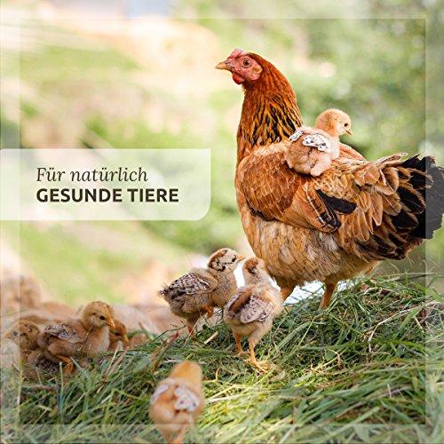 AniForte Hühnertraum - 5