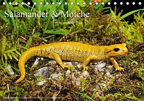 Salamander und Molche (Tischkalender 2017 DIN A5 quer): Fotokalender mit Bildern von Molchen und Salamandern (Monatskalender, 14 Seiten ) (CALVENDO Tiere)
