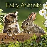 Baby Animals Calendar 2019