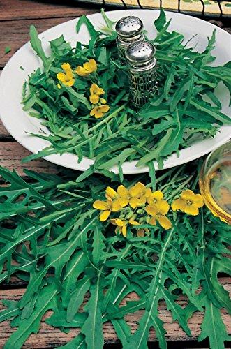 Il vous suffit de graines de salade???Roquette sauvage???Diplotaxis ? feuilles ?troites???50?g de graines???Bulk Lot