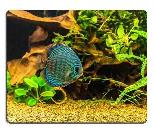 (Maus - Pads) Naturkautschuk - Gaming - Maus gepflanzt, Eine Grüne Schöne Bunte Fische Tropischer Süßwasser - Aquarium, in Drei Größen für die YANTG Ltd. Verkauft. -