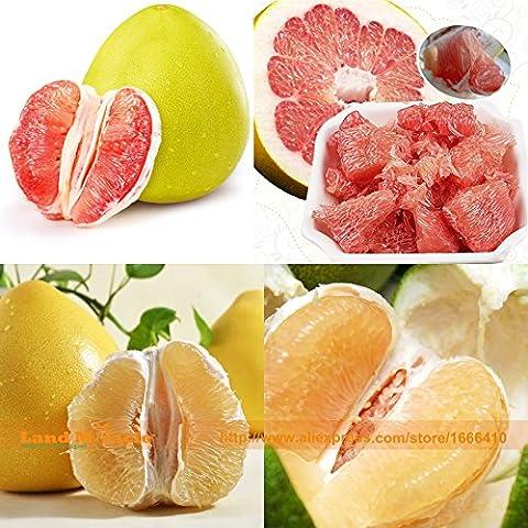 100% réel de pépins de pamplemousse, 50 graines / Pack, haute « vitamine C » Graine de fruits biologiques, Citrus Maxima semences forestières terrestres Miracle