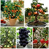 Green Gardens Dwarf Fruit Seeds Combo Orange,Apple, Grape, Pomegranate, Guava 5 seeds Each