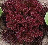 Best Lettuces - Go Green Lettuce Lollo Rosso-50 Seeds Review