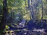 Artland Qualitätsbilder I Alu Dibond Bilder Alu Art 80 x 60 cm Landschaften Gewässer Foto Grün B7YU Bachlauf im Laubwald