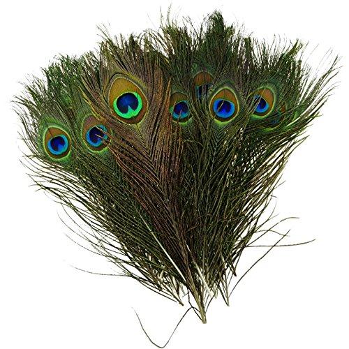 toogoor-natural-las-plumas-del-pavo-real-10-12-pulgadas-de-largo-40-piezas-por-paquete