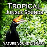 Tropical Jungle Wildlife for Stress Release and Peace of Mind