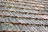 10L Moosvernichter für Dach Moosentferner Dachreiniger Untergrundvorbereitung Dachfarbe Algen und Moos Entfernen