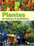 Plantes de balcon et jardinières...