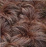 JustSeed - Ornamentales Gras - Seggen (Carex Species) Mix - 20 Samen