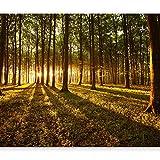 murando - Fototapete Wald 350x256 cm - Vlies Tapete - Moderne Wanddeko - Design Tapete - Wandtapete - Wand Dekoration - Wald Sonnenschein Bäume Natur Landschaft c-B-0027-a-c