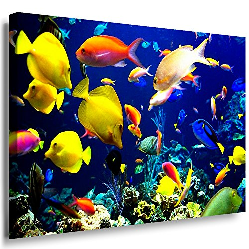 Qn Poster (Julia-art Leinwandbilder - Fische, Ozean Meer Bild 1 teilig - 60 mal 40 cm Leinwand auf Rahmen - sofort aufhängbar ! Wandbild XXL - Kunstdrucke QN.17-2)