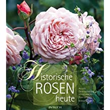 Historische Rosen heute: Aktuelle Gartengestaltung mit besonderen Rosensorten