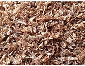 Premium Quality - Betel Nut Dust - Areca Nut Chopping - Betel Nut - Pan - 500 Grams - Loose Packed - Like Pencil Dust When Sharpned -Pmw