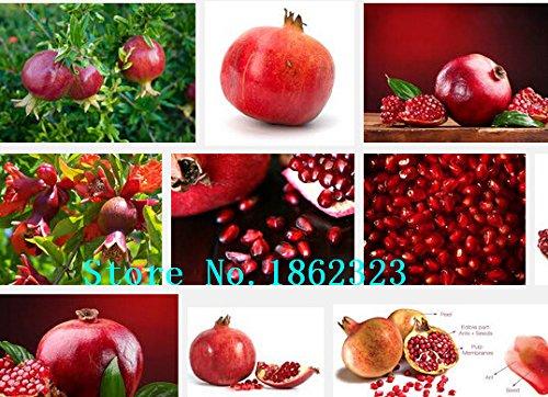200-bag-semi-di-pomodoro-nero-di-frutta-e-verdura-semi-resistente-alle-malattie-ornamentali-per-limp