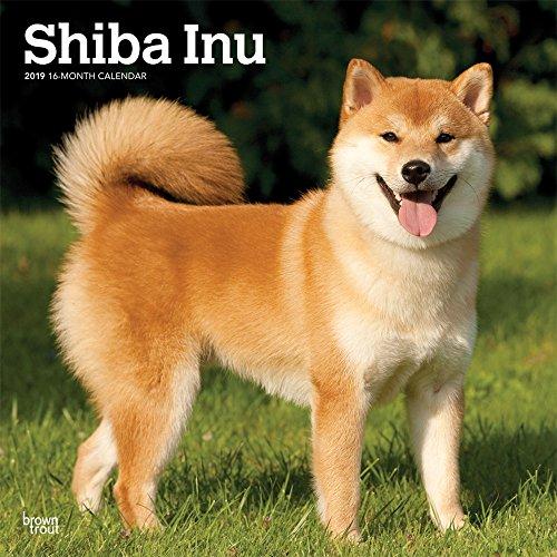 Shiba Inu 2019 - 18-Monatskalender mit freier DogDays-App (Wall-Kalender)
