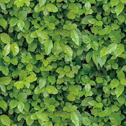 Wdragon adesivo stile naturale verde foglie contatto carta da parati carta da parati adesivi mobili armadi armadio Shelf Liner, 45cm x 200cm