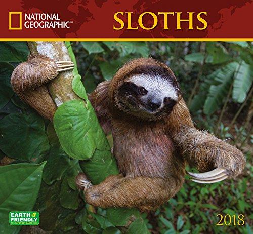 National Geographic Sloths 2018 Wall Calendar