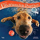 Underwater Puppies 2018 Wall Calendar