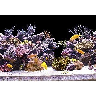 StickandShine 200 cm Aquarium Hintergrund Folie schwarz 70 cm breite/höhe