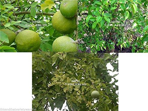 GEOPONICS Bean Mix Garden Seed-Kollektion, Erbstück, Bio-Samen, 6 Top Variies -