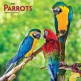 Parrots - Papageien 2019 - 18-Monatskalender (Wall-Kalender)