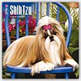 Shih Tzu 2016 - 18-Monatskalender mit freier DogDays-App: Original BrownTrout-Kalender [Mehrsprachig] [Kalender] (Wall-Kalender)