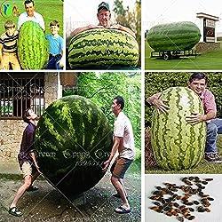 30 / bag Riesen-Wassermelone Samen, süße Geschmack Gemüse und Fruchtsamen sehr Riese köstlich