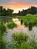 Posterlounge Forex-Platte 90 x 120 cm: Nationalpark Donauauen, Nahe Orth an der Donau von Rainer Mirau/Mauritius Images