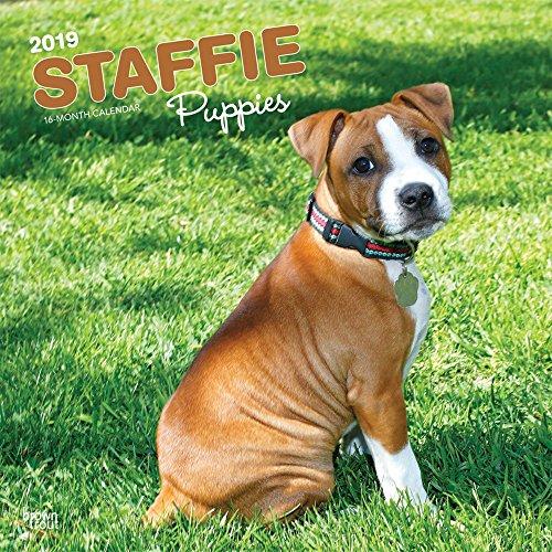 Staffordshire Bull Terrier Puppies - Staffordshire Bull Terrier Welpen 2019 - 18-Monatskalender: Original BrownTrout-Kalender, mit freier DogDays-App