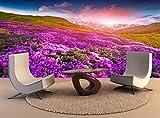 Foto Carta murale Magic rosa fiori di rododendro in montagna. Estate sunrise Wall Art Decor Sfondo foto poster di alta qualità di stampa
