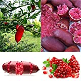 Portal Cool 0C56 B35A Brand 20PcsPink Finger Fruit Red Lime Rare Plant Home