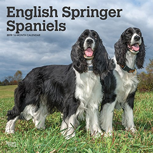 English Springer Spaniels 2019 - 18-Monatskalender mit freier DogDays-App: Original BrownTrout-Kalender [Mehrsprachig] [Kalender]